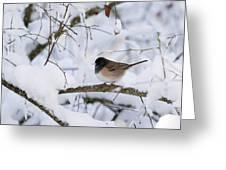 Oregon Junko In Snow Greeting Card