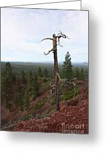 Oregon Landscape - Confused Tree At Lava Butte Greeting Card