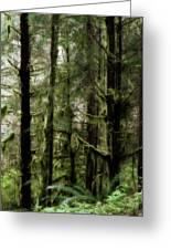 Oregon Old Growth Coastal Forest Greeting Card