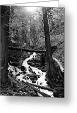 Oregon River Black And White Greeting Card