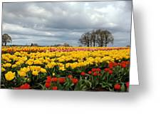 Oregon Tulip Fields 2 Photograph Greeting Card