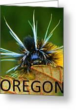 Oregon Woolly Bear Greeting Card