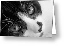 Oreo In Black And White Greeting Card