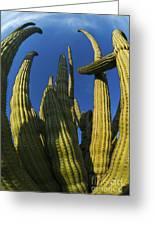 Organ Pipe Cactus Arizona Greeting Card