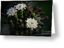 Organ Pipe Cactus Flowers  Greeting Card