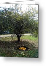 Organize Oranges Greeting Card