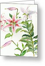 Oriental Lily Mona Lisa Liliaceae Greeting Card