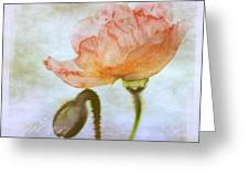 Oriental Poppy And Bud Greeting Card