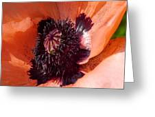 Oriental Poppy - Duvet Covers Greeting Card