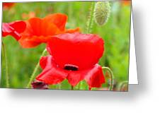 Oriental Poppy Flower Art Prints Poppies Red Baslee Troutman Greeting Card