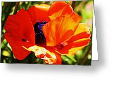 Oriental Poppy Series  No.1 Greeting Card