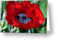 Oriental Red Photograph Greeting Card
