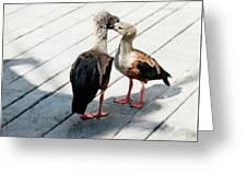 Orinoco Geese Touching Heads On A Boardwalk Greeting Card