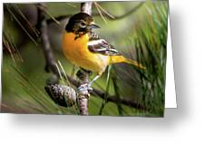 Oriole And Pine Cone Greeting Card