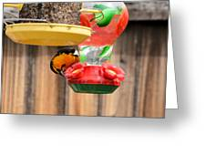 Oriole N Nectar Greeting Card