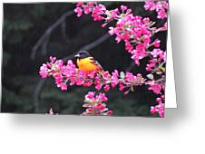 Oriole On Crabapple Greeting Card