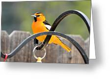 Oriole Greeting Card