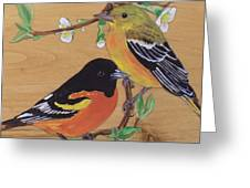 Orioles 1 Greeting Card