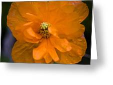 Ornage And Black 1 Greeting Card