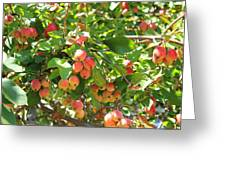 Ornamental Apples On A Tree Greeting Card