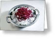 Ornamental Cabbage Greeting Card