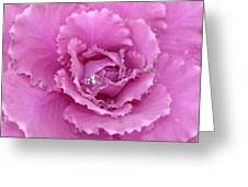 Ornamental Cabbage With Raindrops - Square Greeting Card