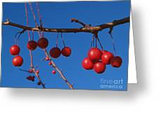 Ornamental Crabapple Branch Greeting Card