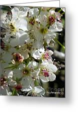 Ornamental Pear Greeting Card