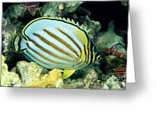 Ornate Butterflyfish Greeting Card