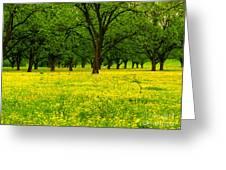 Osceola Landscape Greeting Card