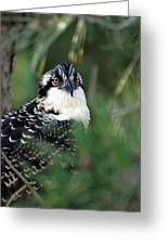 Osprey 30 Greeting Card