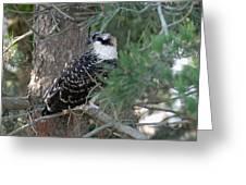 Osprey 36 Greeting Card