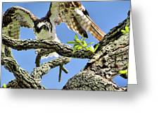 Osprey 4 Greeting Card