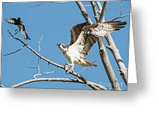 Osprey And Black Billed Magpie Greeting Card