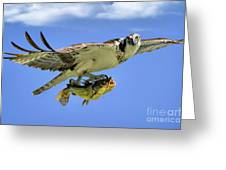 Osprey And Catfish Greeting Card