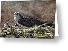 Osprey And Young - Feeding Greeting Card