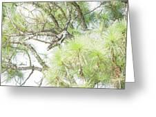 Osprey Applesauce Greeting Card