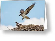 Osprey Approach Greeting Card