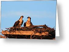 Osprey At Home Greeting Card
