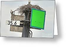 Osprey At Its Nest In A Navigation Marker Greeting Card
