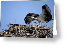Osprey At Nest-2 Greeting Card