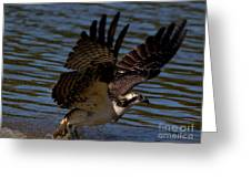 Osprey Catching A Fish Greeting Card