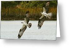 Osprey Chase Greeting Card