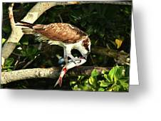 Osprey Dining Greeting Card