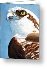 Osprey Eye Greeting Card