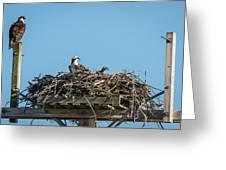 Osprey Family 8283 Greeting Card