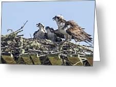 Osprey Family Portrait No. 2 Greeting Card