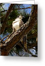 Osprey Hunting Greeting Card