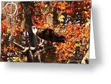 Osprey In Fall Greeting Card