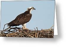 Osprey In Nest Greeting Card